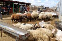 وضعیت خوب تولید گوشت کشور