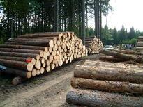 جنگلهای شمال در مسیر نابودی