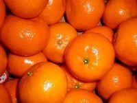 خرمای پیارم، نارنگی و مروارید هرمزگان ثبت جهانی شدند