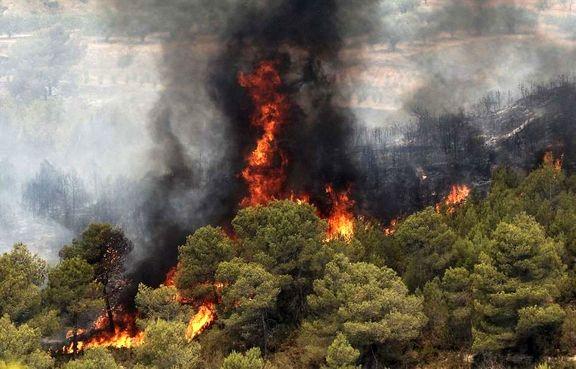 ۱۰۰فقره آتش سوزی جنگلها در نوروز ۹۷