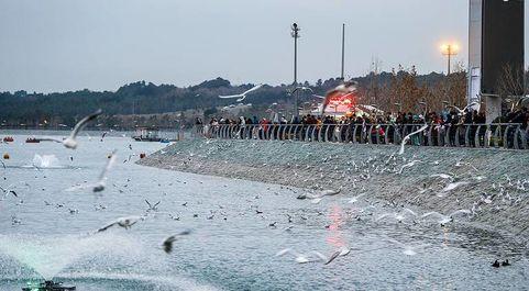 میهمانان زمستانی دریاچه چیتگر