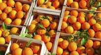45 هزار ریال؛ قیمت پرتقال شب عید