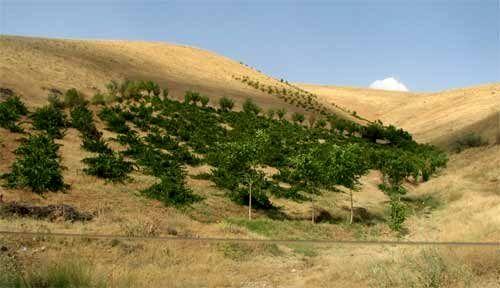 امهال تسهیلات کشاورزان خسارتدیده ناشی از حوادث غیرمترقبه استان آذربایجان شرقی
