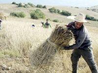 بیمه رایگان روستاییان فاقد پوشش بیمهای
