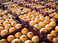 ۱.۵برابر واردات میوه صادرات دارم