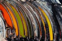 برترین تصاویر مسابقه عکاسی محیط زیست2019