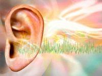 کشف نورونهای جدید برای درمان وزوز گوش