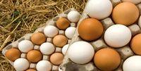 صادرات تخم مرغ از سرگرفته شد