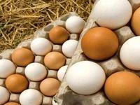 آغاز جمعآوری تخممرغ مازاد