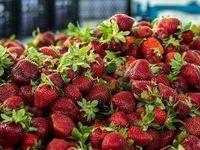 میوههای ضدکرونایی همچنان میداندار بازار