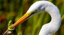 عکس های زیبا از پرندگان جهان +تصاویر