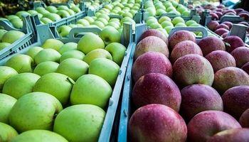 برداشت سیب از باغات شهرستان سلسله لرستان +عکس