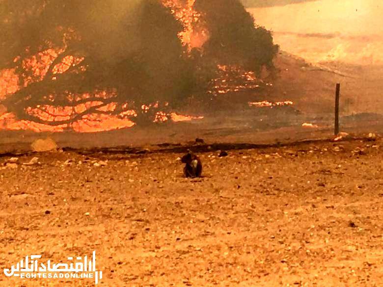 آتش سوزی استرالیا 2
