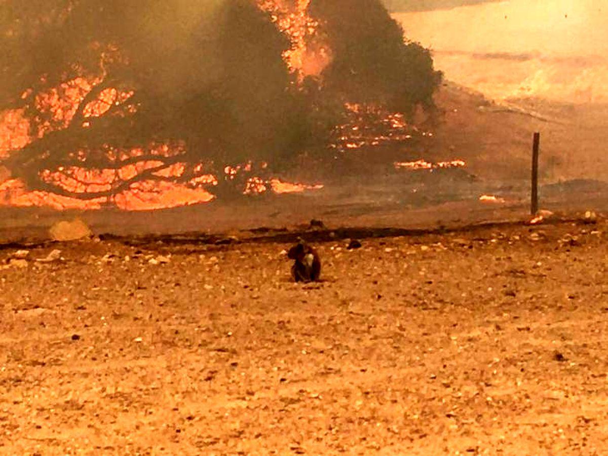 آماده باش شهرداریها و دهیاریها برای پیشگیری از آتش سوزی