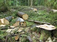 جنگل خـواری با تله کابین!