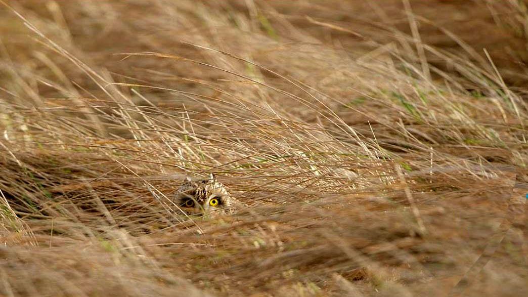 پنهان شدن در طبیعت