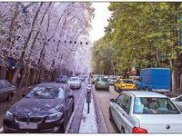 ولیعصر؛ چهار فصل یک خیابان شرقی