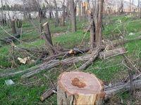 مرگ اجباری درختان باغ «جهان» فرمانفرما