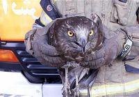 ورود پرنده شکاری به یک مغازه +عکس