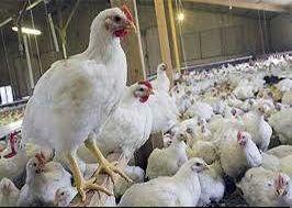 قزاقستان واردات گوشت مرغ از روسیه را موقتاً ممنوع کرد