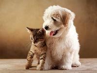 عید حیوانات هم مبارک!