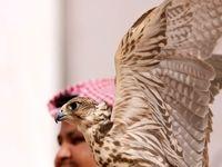 تفریحات زمستانی مردان عربستانی +تصاویر