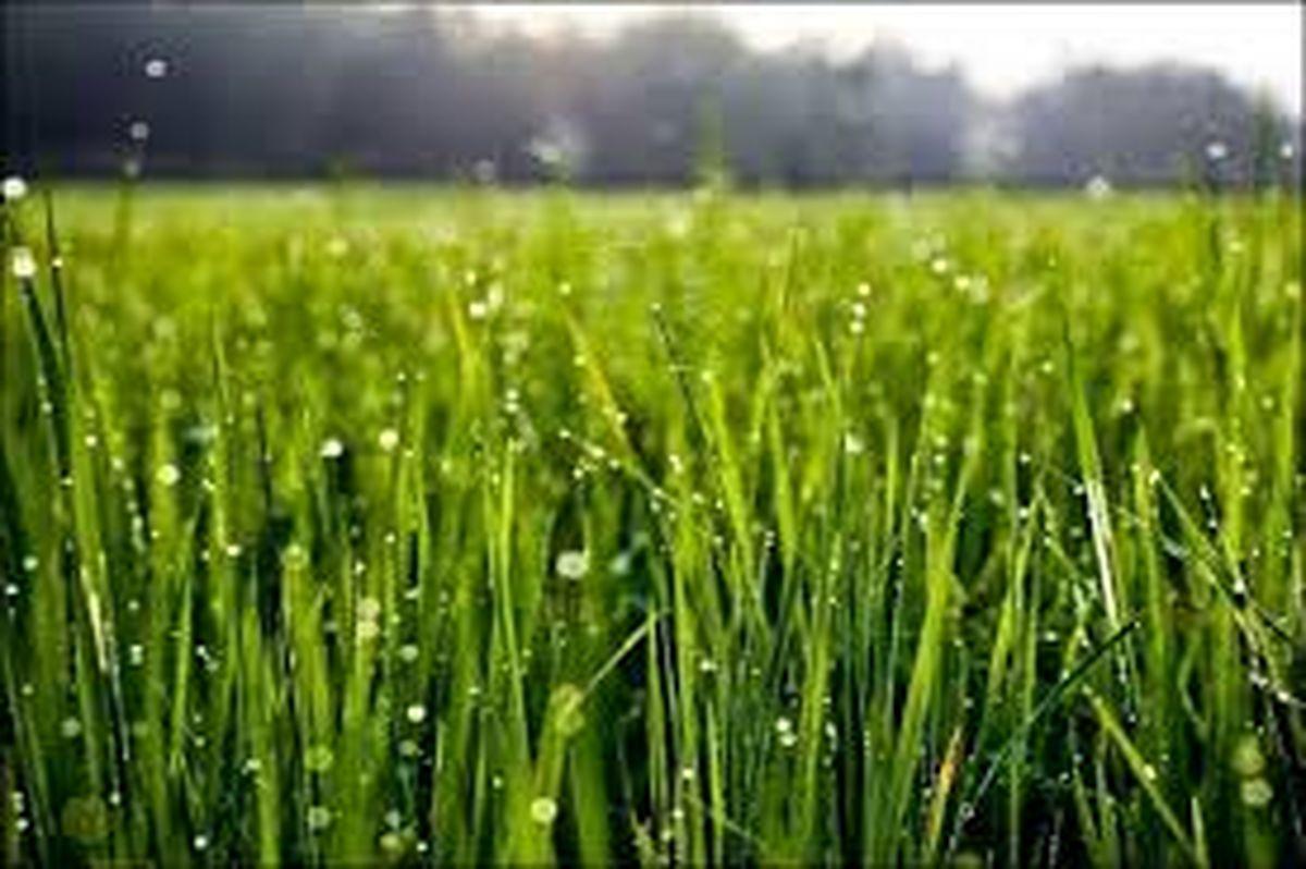 نهادههای کشاورزی تا تولید محصول رصد میشوند