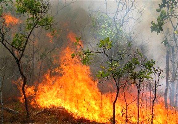 آتشسوزی در جنگل با ۶مصدوم و ۴فوتی