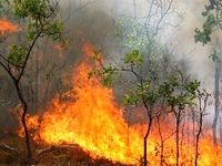 چه میزان از جنگلهای کشور در آتش سوختند؟
