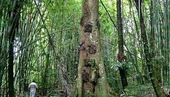 دفن نوزادان در تنه درخت! +تصاویر