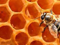 عسل را با موم بخریم یا بدون موم؟/ آیا موم حاوی پارافین صنعتی و سموم آفتکش است؟