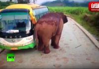"""حمله فیل به وسایل نقلیه در استان یوننان """"چین"""" +فیلم"""