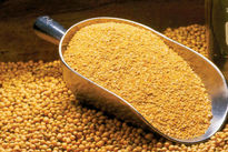 توزیع ۱۰۰هزارتن کنجاله سویا از امروز در سراسر کشور/ هر کیلو کنجاله سویا 2600تومان