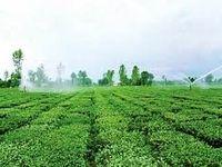 تجهیز ۱میلیون و ۷۳۳هزار هکتار از اراضی کشاورزی به سامانههای نوین آبیاری