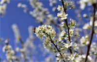 فرش رنگین بهار در طبیعت گلستان +تصاویر