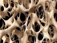 احتمال درمان ناباروری با مغز استخوان
