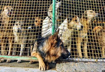 تجارتی سیاه به نام «حیوان خانگی» 