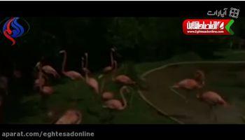 واکنش عجیب حیوانات به کسوف +فیلم