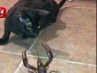 رفاقت گربه و خرچنگ! +فیلم