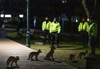 محبوبیت عجیب خانوادهای از روباهها در تورنتو! +عکس