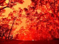 جهانِ پس از آتشسوزی استرالیا چگونه خواهد بود؟