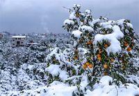 هشدارهای هواشناسی به کشاورزان تا ۴ بهمن