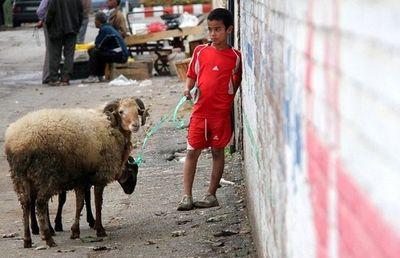 رونق خرید گوسفند در آستانه عید قربان