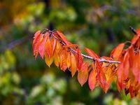 تصاویری حیرت انگیز از فصل رنگها