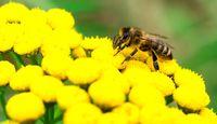 آتش سوزی در برزیل بالغ بر 500میلیون زنبور را به کام مرگ کشاند