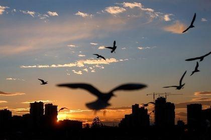 حضور پرندگان مهاجر در تهران +تصاویر