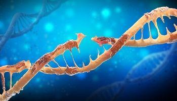 پیشگیری از سرطان پوست با ترمیم سلولهای آسیبدیده DNA
