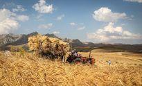 دولت در تصویب قیمت گندم تورم را هم حساب کند