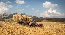 خطر قاچاق در کمین گندم!/ دولت مانع از به خطر افتادن امنیت غذایی شود