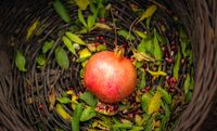 میوههایی که بهترین خون ساز هستند